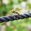 温める?冷やす?蜂やムカデに刺された時の正しい対処法&応急処置はコレだ!