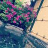 下呂温泉の高級旅館を超満喫! 『離れの宿 月のあかり』のレビュー